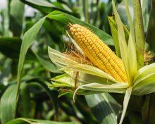 Incontro: Cibo e Agricoltura