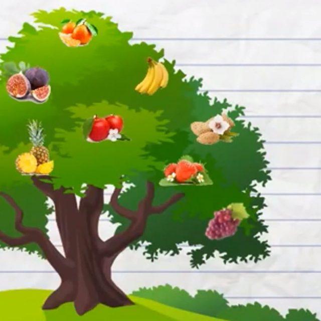 Catechesi 1° Media – I frutti dello Spirito Santo